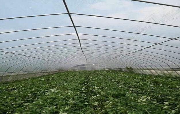 黔西县林泉镇西桥村移民安置点新建蔬菜大棚必威体育平台足球